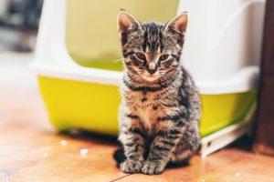 Cat Litter Singapore